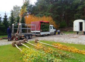 Transport i rozładunek roślin ozdobnych