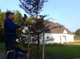 Sadzenie drzew na ogrodzie